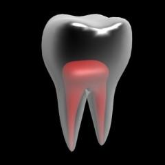 Zahnmark, Darstellung, gesunder Zahn
